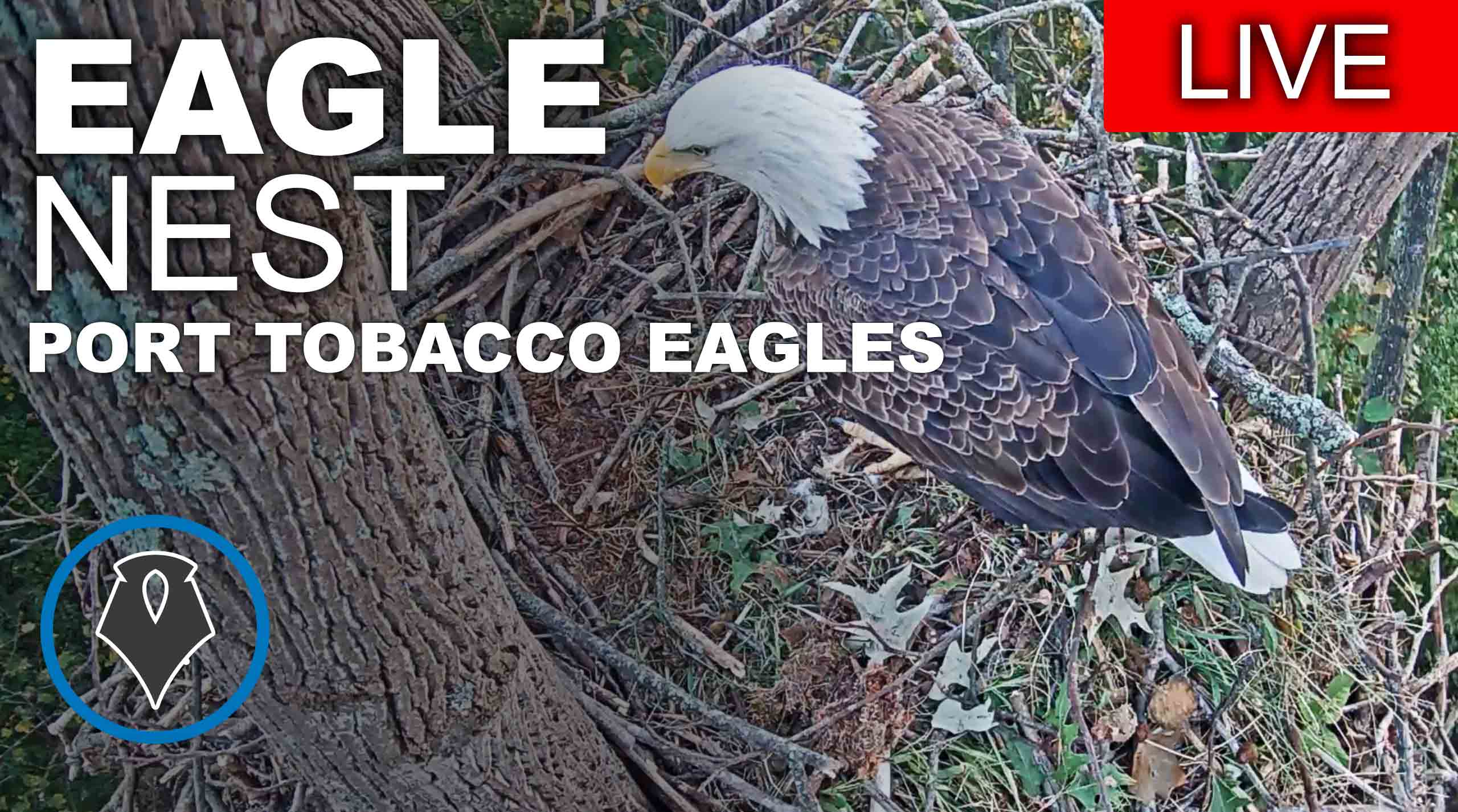 Port Tobacco Eagles